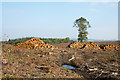 NZ0258 : Timber stacks in clear-felled area of South Sandyford Plantation by Trevor Littlewood