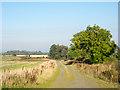NZ0554 : Gravelled road alongside field edge by Trevor Littlewood