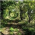 TL3462 : On Thorofare Lane by John Sutton