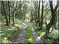 SE1221 : Elland FP18 in the oak wood by Humphrey Bolton
