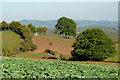SO8179 : Farmland west of Fairfield, Worcestershire by Roger  Kidd