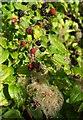 SX9065 : Autumn on Stantaway Hill by Derek Harper