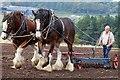 NT9438 : Shires at Hay Farm, Northumberland by David Chatterton