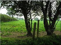 H5572 : Trees, Bracky by Kenneth  Allen
