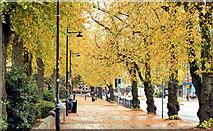 J3372 : Autumn trees, University Road, Belfast (October 2015) by Albert Bridge