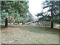 SU2916 : Half Moon Common, fallen tree by Mike Faherty