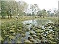 SU2917 : Half Moon Common, pond by Mike Faherty