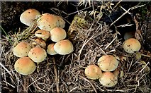 J3875 : Fungi, Belfast - October 2015(1) by Albert Bridge