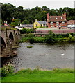 SO3700 : Cygnets and swans on the Usk in Usk by Jaggery
