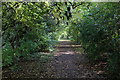 SE4247 : Green Tunnel on the Wetherby Railway Path by Chris Heaton