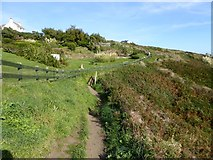 SW7012 : South West Coast Path at Housel Bay by David Smith