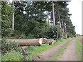 SE8616 : Timber stacks by Jonathan Thacker