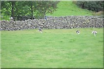NY1808 : Trailhounds at Wasdale Head Show. by Philip Halling