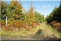 NZ0055 : Footpath entering coniferous plantation by Trevor Littlewood