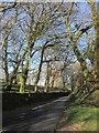 SX2577 : Lane to Stonaford by Derek Harper