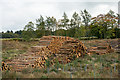 NZ0156 : Timber stacks in Eliza Plantation by Trevor Littlewood