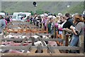 NY1808 : Pens of herdwick sheep at the Wasdale Head Show by Philip Halling