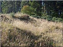 NH6560 : The axis of Woodhead III Long Cairn by Julian Paren