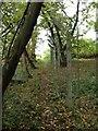 TL1039 : Footpath through Chicksands Firing Range by Dave Thompson
