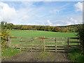 NZ2730 : Woodland beyond grassed field by Trevor Littlewood