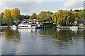TQ0966 : Shepperton Marina channel by Alan Hunt