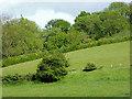 SO7486 : Pasture and woodland near Hampton Loade, Shropshire by Roger  Kidd