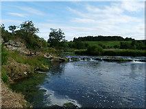 NT8754 : River Whiteadder at Willie's Hole by cathietinn