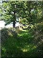 SE0422 : Dodge Royd Lane, Norland by Humphrey Bolton