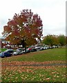 SP0588 : Autumn in New Spring Street by Alan Murray-Rust