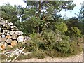 SY0486 : Stacked logs with a warning notice, Bicton Common by David Smith