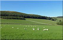 NT4437 : Border Farmland View by Mary and Angus Hogg