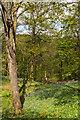 NY3606 : Woodland by Ian Capper