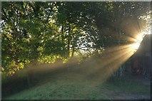 ST0207 : Morning sunlight, Cullompton by Derek Harper