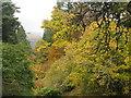 NT1634 : Autumn colour at Dawyck by M J Richardson