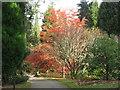 NT1634 : Path at Dawyck Botanic Garden by M J Richardson