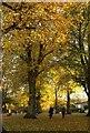 ST5874 : Trees at Redland by Derek Harper