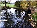 SE4017 : Reflections of Autumn by Steve  Fareham