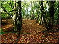 H4863 : Fallen leaves, Seskinore by Kenneth  Allen