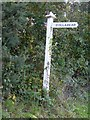 SS5428 : Ivy on the signpost to Collabear by David Smith