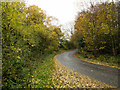 NZ2333 : Woodland of Bishop's Close and bend in road by Trevor Littlewood