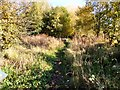 SJ8995 : Gorton Heritage Trail by Gerald England