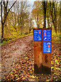 SD7819 : National Cycle Network Route 6 at Lumb by David Dixon