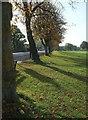 ST5775 : Trees by Westbury Road, Durdham Down by Derek Harper