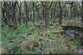 SK2479 : Rocks and gnarled trees on Bole Hill by Bill Boaden