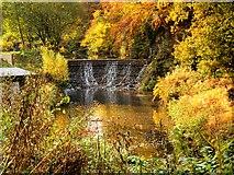 SJ8382 : River Bollin, Weir at Quarry Bank by David Dixon