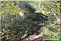 ST1898 : Woodland, bottom of Rhiw Syr Dafydd Hill, Oakdale by M J Roscoe