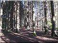 NT0074 : Lochside path at Beecraigs by M J Richardson