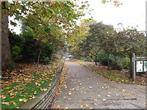 TM1644 : The Mayors' Walk in Christchurch Park by Adrian Cable