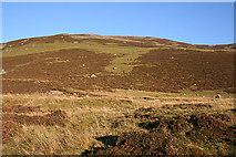 NO1485 : Looking towards Sròn nan Gabhar by Anne Burgess