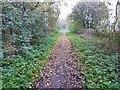 SK8571 : Leaves on the track by Steve  Fareham
